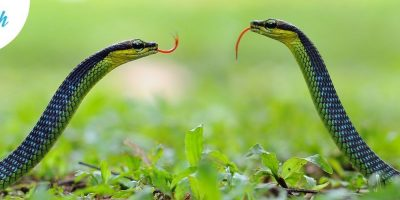 Snake in the Grass | Energizer Drama Game